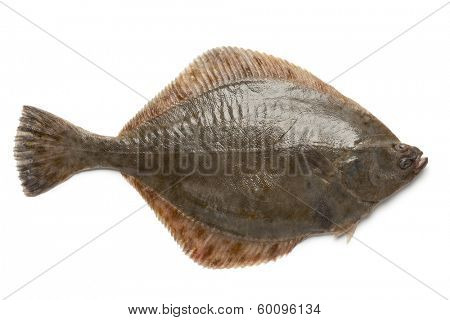 Whole single fresh  European flounder on white background