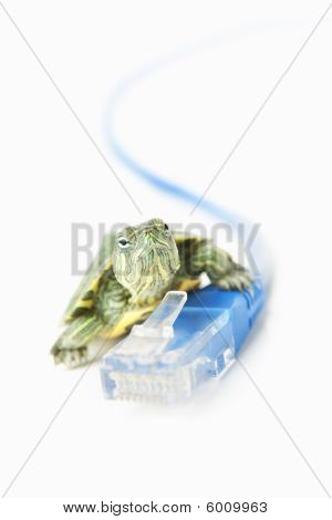 Turtle On Lan Cable