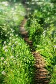 stock photo of curvy  - Beautiful curvy path in country side in the morning - JPG