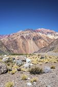 stock photo of mendocino  - National Road 7 passing by the Department of Lujan de Cuyo in Mendoza Argentina - JPG