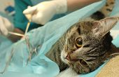 stock photo of veterinary surgery  - Veterinarian - JPG
