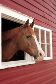 Horse Looks Out Window poster