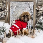Shih tzu wearing a christmas suit sitting on a bridge in a winter scenery, 1 year old