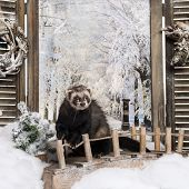 Ferret on a bridge in a winter scenery