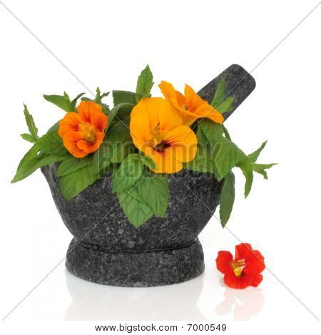 Nasturtium Flower and Mint Herb