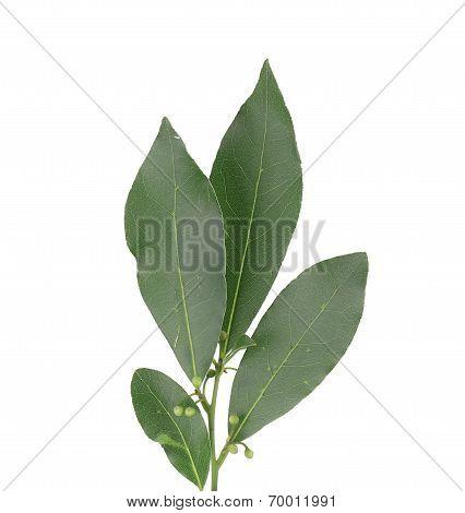 Bay leaves.