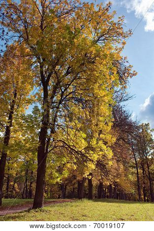 Russia Gatchina bright autumn tree in park