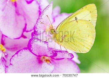 A little butterfly resting on a flower.