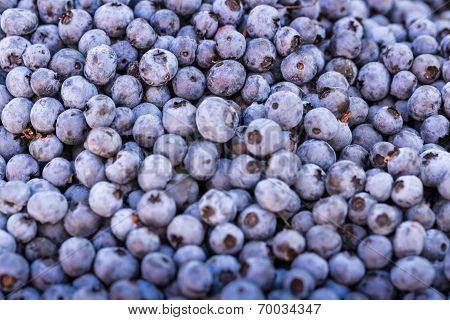 Fresh Bilberries. Close-up Background.