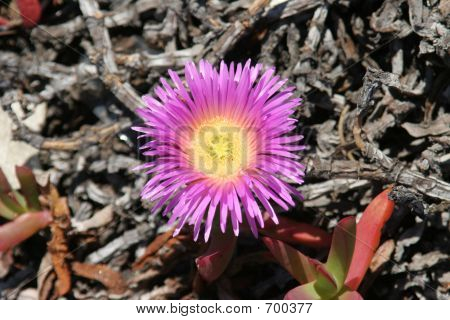 Purple And Yellow Wildflower