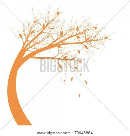 Autumn Tree silhouette isolated on white