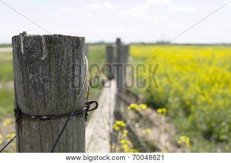 Fence Post in the Canola Field