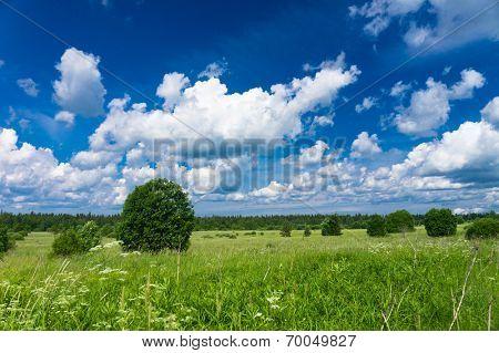 Scenic View Fresh Landscape