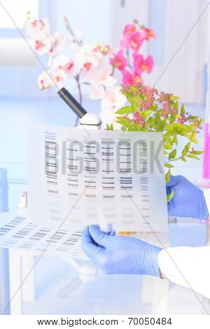 Scientist analyzing DNA sequence for GMO experiments with plants