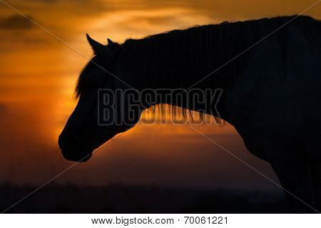 Horse portrait dawn