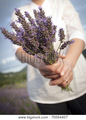 Woman Holding Lavander Flowers