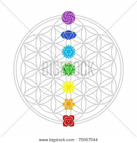 Flower of Life Chakras White
