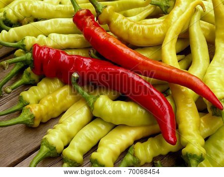fresh harvested hot chili peppers
