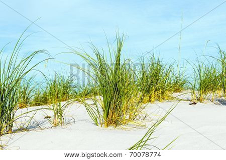 Grass Grows At Dune At A Beautiful Beach