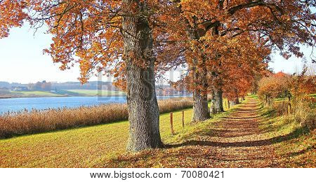 Autumnal Hiking Trail At The Lakeside With Gnarled Oak Trees, Bavarian Landscape