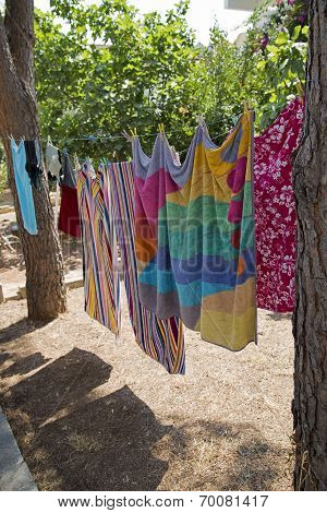 Hanging Laundry Between Pine Tree In The Garden