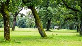 foto of lipizzaner  - A Lipizzaner horse in the meadow of Slovenia - JPG