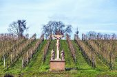 stock photo of inri  - vineyard and crucifix made of sandstone in eltville under blue sky - JPG