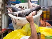 image of yangon  - Worker carrying carp in a plastic basket at a seafood market in Yangon Myanmar - JPG