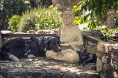 stock photo of spotted dog  - A border collie dog a black cat rest on a Buddha statue in a shady spot on some stone steps