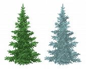 image of blue spruce  - Green and blue Christmas spruce fir trees isolated on white background - JPG