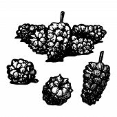 picture of mulberry  - Icon of mulberry vector illustration stylized as engraving - JPG