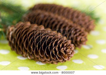 Ramita de abeto con conos marrones.