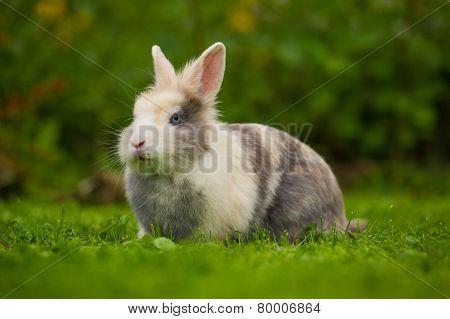 Cute Fluffy Rabbit On Green Grass