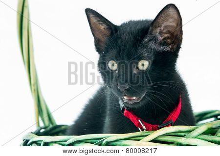Black cat in white snow