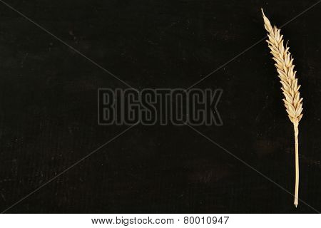 Spikelet of wheat on black wooden background