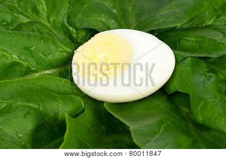 Half Of Egg
