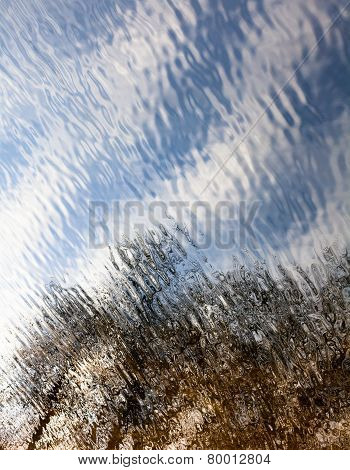 Water Surface With The Reflection Of The Leafless Trees