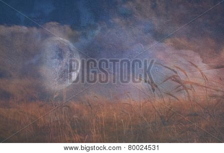 Moon Fall over Field of Grain