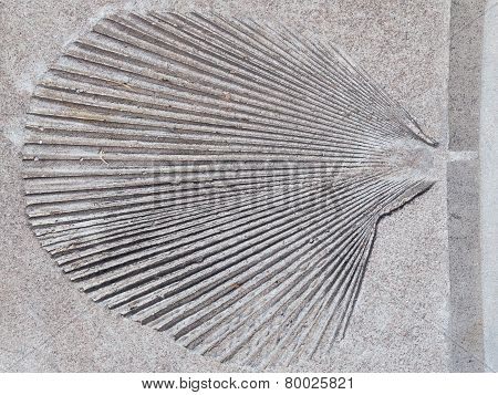 Leaf In A Gray Concrete