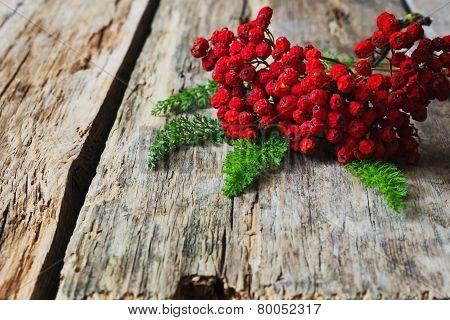 Dried Red Rowan Branch