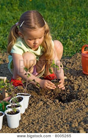 Little Girl Planting Seedlings