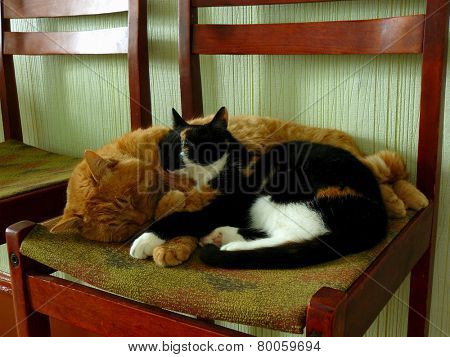 cats sleeping on the chair