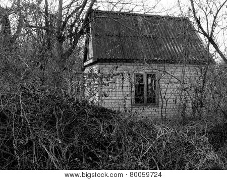 small abandoned house surrounded by leafless trees