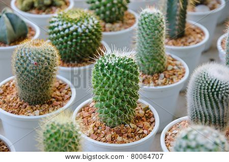 Small Different Types Of Cactus Plants.