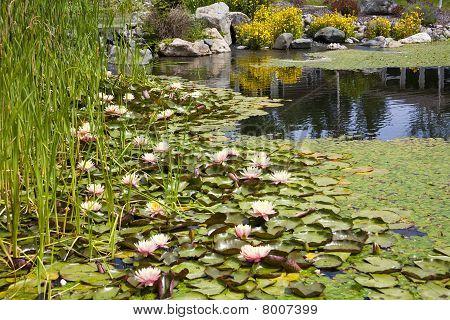 Característica de água de lagoa de quintal