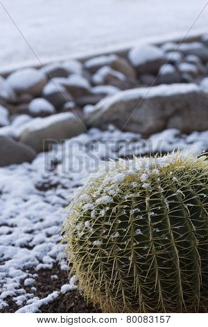 Snow And Ice On Barrel Cactus And Rocks