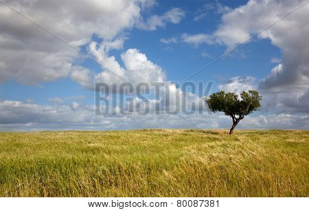 lonely tree at a farm in alentejo, the south of Portugal, typical landscape
