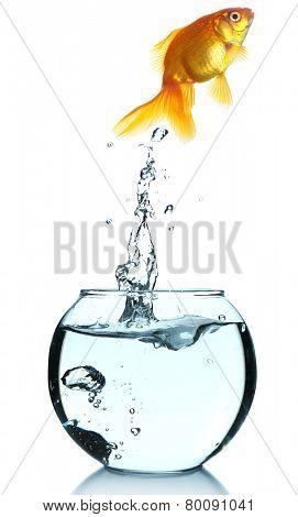 Goldfish jump out of the aquarium