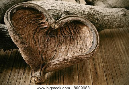 closeup of a heart-shaped nut shell and some logs in the background on a rustic wooden surface