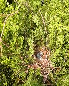 picture of safe haven  - Tiny collection of bird - JPG